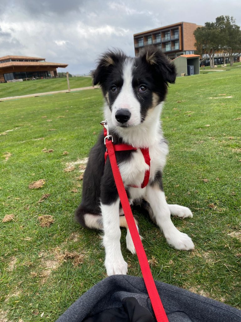 Georgina - Walks With My Dog
